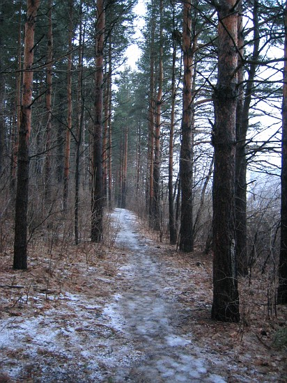 Part of the trail